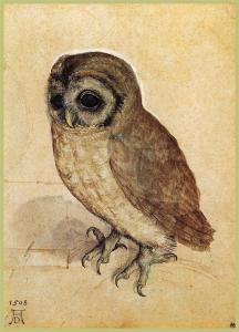 albrech-durer-la-petite-chouette-1506-dessin-sur-parchemin-vienne-albertina