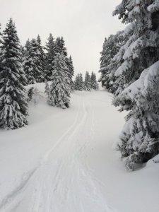 paysagedeneige