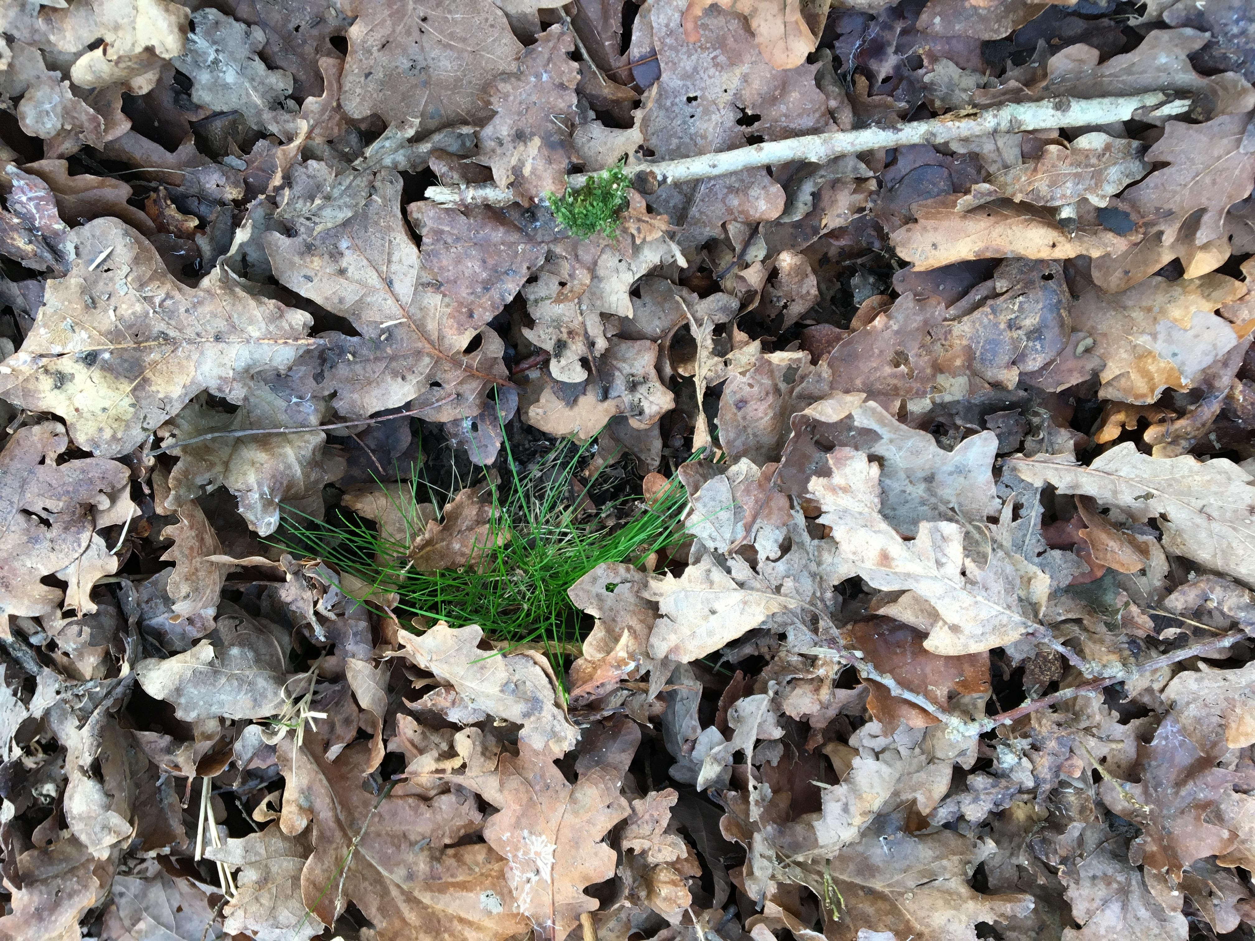 feuillesmortesetvertespoir