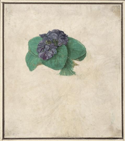 violette-bouquet-durer
