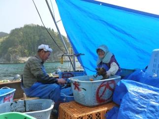 Les pêcheurs retourenent à la mer
