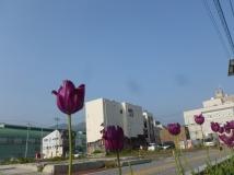 Les fleurs revivent